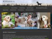 Labrador kennel Genesis Lab