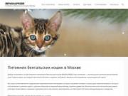 BENGALPRIDE, питомник бенгальских кошек в Москве (Россия, Московская область, Москва)