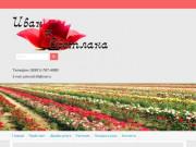 Розы Старый Оскол Иван и Светлана. Купить оптом и розница | rozaoskola.ru