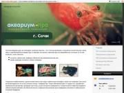 Аквариум-Про — аквариумная компания (г. Сочи)
