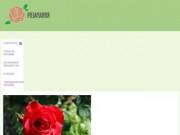 Домашние цветы-розы: уход. Подробности тут. (Россия, Нижегородская область, Нижний Новгород)