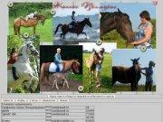Лошади приморского края