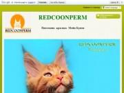 Питомник красных мейн-кунов REDCOONPERM (Россия, Пермский край, г. Пермь)
