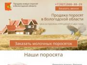 Купить поросят, молочных, маленьких, живых, мясных пород на откорм в Вологоде и области