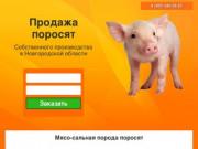 Купить поросят, молочных, маленьких, живых, мясных пород на откорм в Новгороде и области