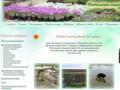 Семейный питомник Пушиных. Многолетние цветы для вашего садового участка. Услуги в озеленении.Большой выбор сортов роз для открытого грунта. (Россия, Тверская область, Тверь)