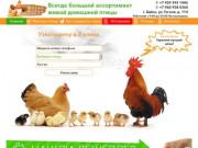 Ферма Алтая - Цыплята, Куры, Утки, Гуси и т.д. от суток до 11 месяцев