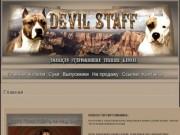 DEVIL STAFF kennel | Питомник Американских стаффордширских терьеров, г. Нижний Тагил