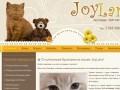 Купить британца в Москве - Питомник британских кошек г. Москва JoyLand