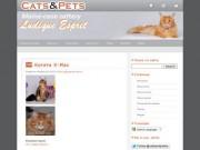 """CATS&PETS.ru - питомник кошек породы Мейн кун """"Ludique Esprit"""" (регистрация в WCF) котята породы Maine Coon от титулованных производителей (аборигенная американская порода - самая крупная порода домашних кошек)"""