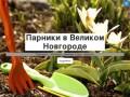 Парники в Великом Новгороде
