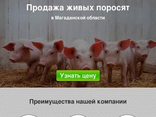 Купить поросят, молочных, маленьких, живых, мясных пород на откорм в Магадане и области