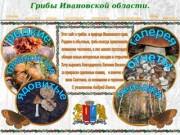Грибы Ивановской области. Белов Андрей.