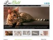 Бенгальская кошка  питомник LEO-GOLD г. Ишим