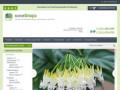 Посадочный материал редких коллекционных растений - МиниФлора