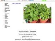 Купить Salvia Divinorum /    купить salvia divinorum