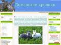 Домашние кролики - Содержание и уход за домашними (мясными) кроликами. На нашем сайте вы найдете ответы на все вопросы по содержанию этих милых животных (сайт в Няндоме)
