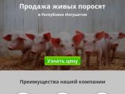 Купить поросят, молочных, маленьких, живых, мясных пород на откорм в Магасе и области
