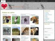 Каштанка | Общество защиты животных города Таганрога