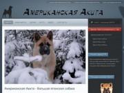 Питомник породы Американская Акита (г. Санкт-Петербург, телефон: 8-921-961-777-5)