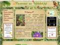 Растения на Чердаков.рф в Рыбинске