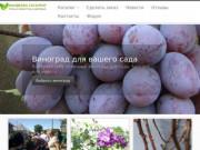 Саженцы винограда. Большой выбор. (Россия, Нижегородская область, Нижний Новгород)