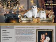 Питомник британских кошек White Milash, Вологда