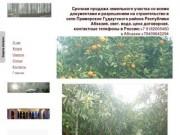 Срочная продажа участка в Абхазии