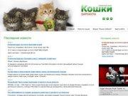 Кошки и котята Барнаула. Продажа и покупка котят в Барнауле. Клубы и питомники Барнаула.
