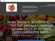Реализую рассаду суперкрупноплодной клубники. (Россия, Воронежская область, Богучар)