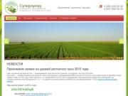 Лук репчатый оптом от производителя в России, урожай 2015 г