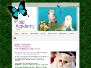 """""""Fold Academy"""" - питомник шотландских вислоухих кошек (Екатеринбург)"""
