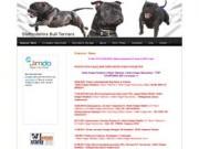 Staffordshire Bull Terriers - в Северодвинске