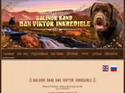 Balinor Band Han Victor Incredible - персональный сайт лабрадора ретривера