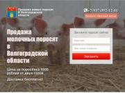 Купить поросят, молочных, маленьких, живых, мясных пород на откорм в Волгограде и области