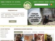 Котопёс – региональная общественная организация помощи бездомным животным р.Алтай