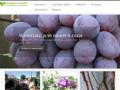 Fandeeva-taganrog.ru — Саженцы винограда. Большой выбор. (Россия, Нижегородская область, Нижний Новгород)