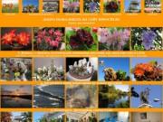 Комнатные растения в Сочи, фотографии Сочи, гостиница «Анжелика»