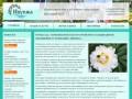 Компания «Ивушка» - благоустройство и озеленение территорий в Москве и за городом