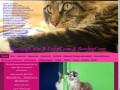 Morozoffcoon Питомник кошек породы Мейн кун