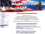 Русские тои и американские той фокстерьеры в Ставрополе