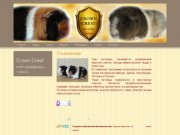 питомник морских свинок породы американский тедди (Россия, Иркутская область, Иркутск)