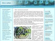 Описание водных животных - губок (Алтай, г. Камень-на-Оби)