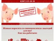 Купить поросят, молочных, маленьких, живых, мясных пород на откорм в Липецке и области