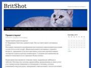 BritShot - Самарский кошачий питомник