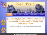 Сайт о жизни Британских Короткошерстных кошек в городе Бородино Красноярского края (тел: 8 983 167 6925)